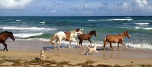 beach-horses-juntos-mission-IMG_0861